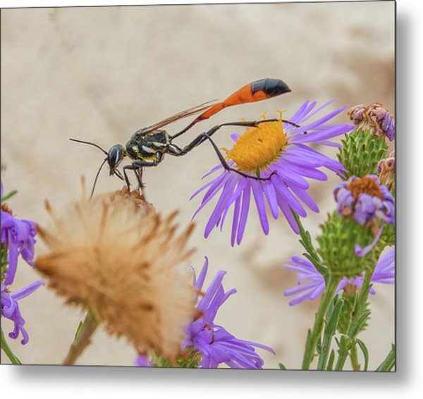 Wasp At White Sands Metal Print