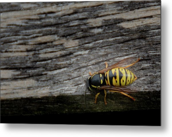 Metal Print featuring the photograph Wasp On Wood by Scott Lyons