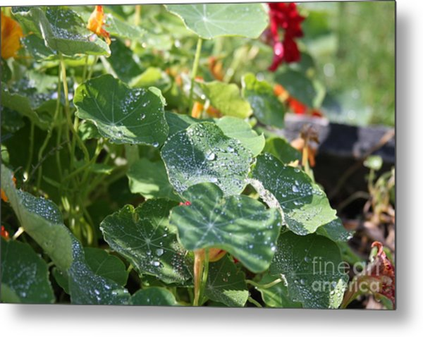 Metal Print featuring the photograph Water Beads After The Summer Rain by Tatiana Travelways