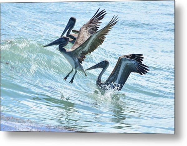 Wave Hopping Pelicans Metal Print