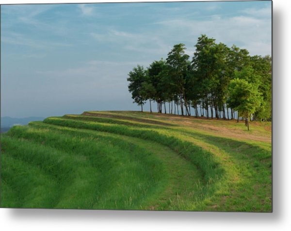 Waves Of Grass Metal Print
