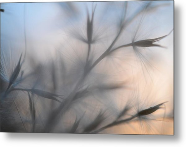 Metal Print featuring the photograph Weed Abstract 3 by Marianna Mills