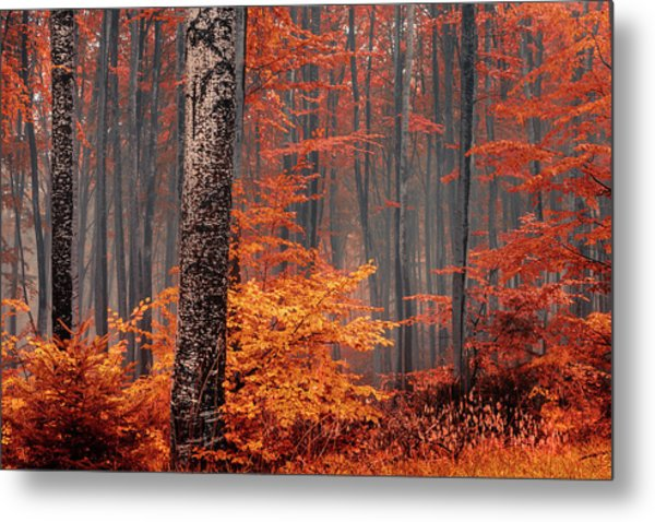 Welcome To Orange Forest Metal Print
