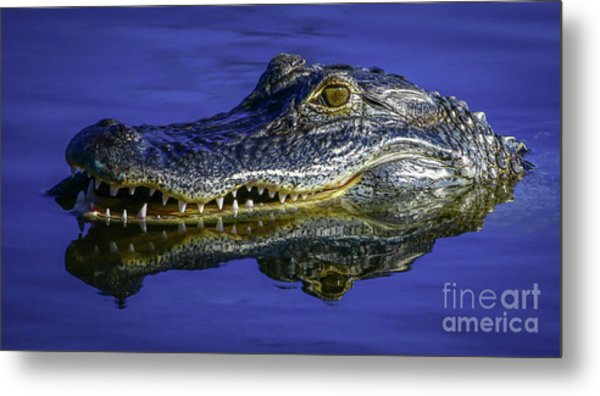 Metal Print featuring the photograph Wetlands Gator Close-up by Tom Claud