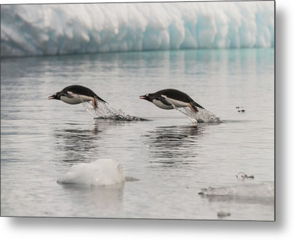 When Penguins Fly Metal Print