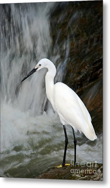 White Bird With Waterfall. Heron In The Metal Print