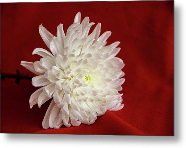 White Flower On Red-1 Metal Print