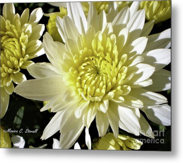 White Flowers W8 Metal Print