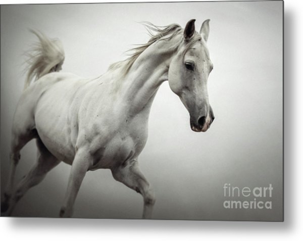 Metal Print featuring the photograph White Horse On The White Background Equestrian Beauty by Dimitar Hristov