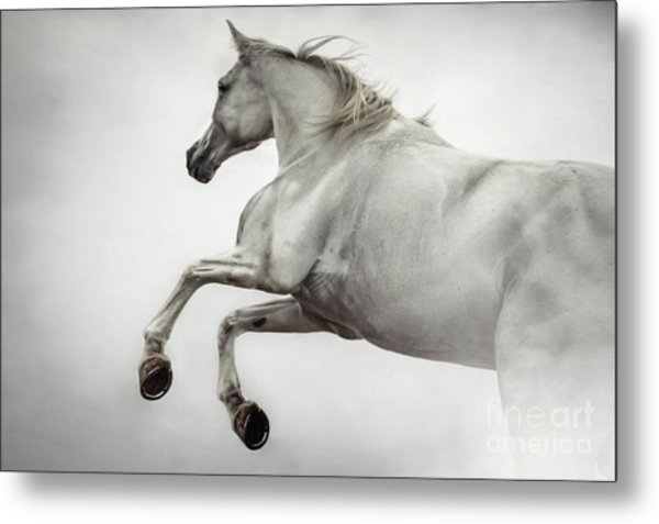 Metal Print featuring the photograph White Horse Rearing Up by Dimitar Hristov