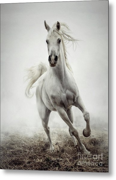 Metal Print featuring the photograph White Horse Running In Winter Mist by Dimitar Hristov