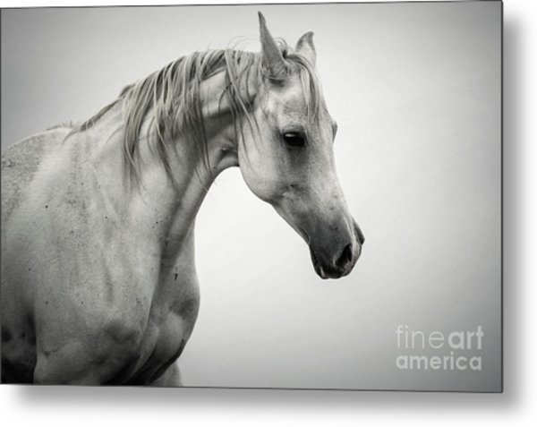 Metal Print featuring the photograph White Horse Winter Mist Portrait by Dimitar Hristov