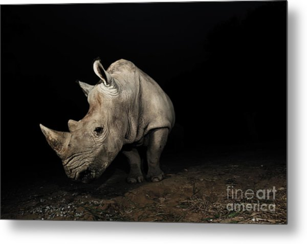 White Rhinoceros Metal Print by Signature Message