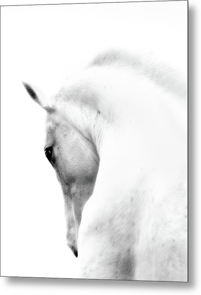 White Stallion Andalusian Horse Neck Metal Print by 66north