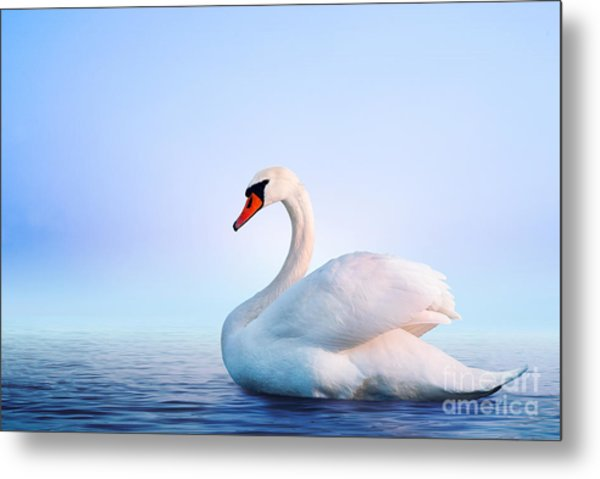 White Swan In The Foggy Lake At The Metal Print