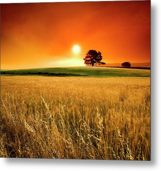 Wide Angle View Of A Blood-red Sunset Metal Print by Hougaard Malan