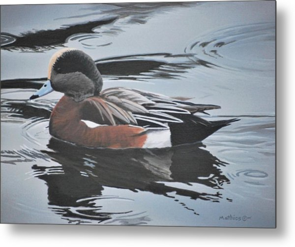 Metal Print featuring the painting Wigeon Drake by Peter Mathios