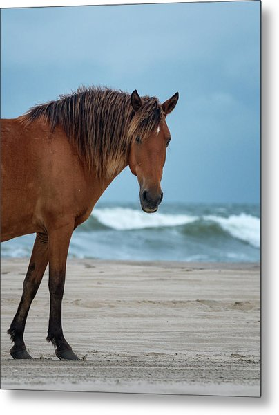 Wild Colonial Spanish Mustang Of Carova Stormy Skies Metal Print