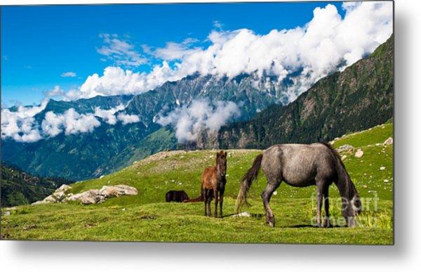 Wild Horses Pasturing On Mountain Metal Print