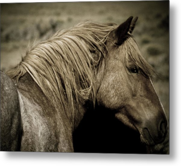 Wild Mustangs Of New Mexico 13  Metal Print