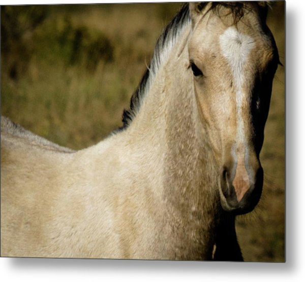 Wild Mustangs Of New Mexico 5 Metal Print