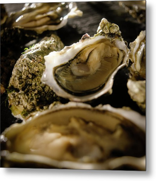 Wild Oysters In Shell Metal Print