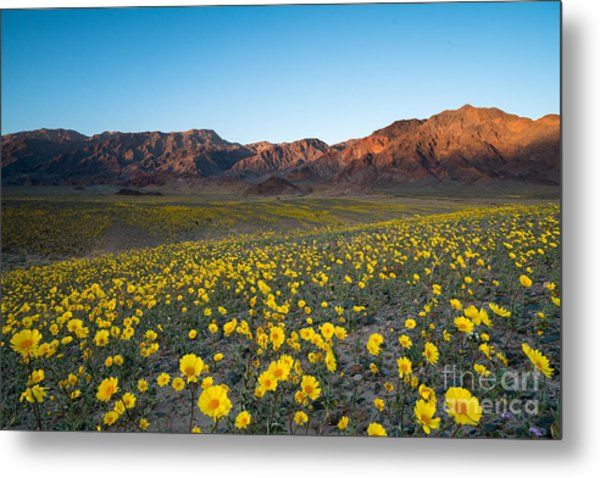 Wildflower Super Bloom In Spring, Death Metal Print