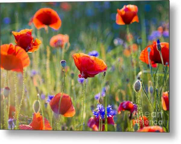 Wildflowers Poppies Metal Print by Mike Mareen