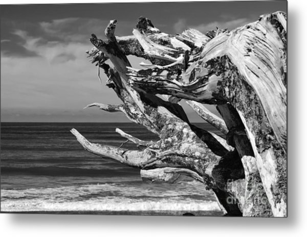 Wind Drift Metal Print