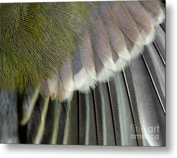Wing Of The Great Tit Close Up Metal Print