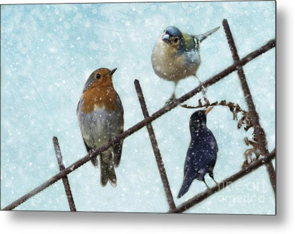 Winter Birds Metal Print