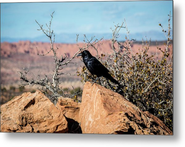 Metal Print featuring the photograph Black Raven by David Morefield