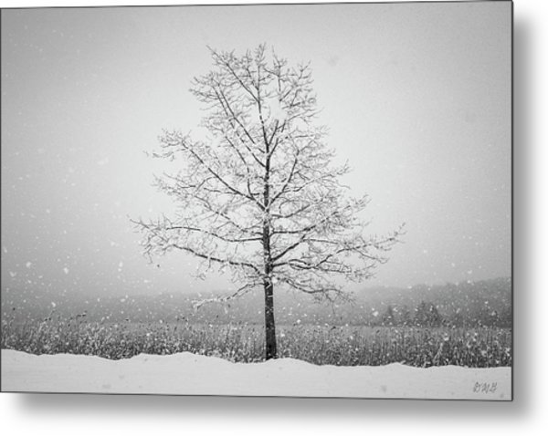 Metal Print featuring the photograph Winter Landscape Vii Bw by David Gordon
