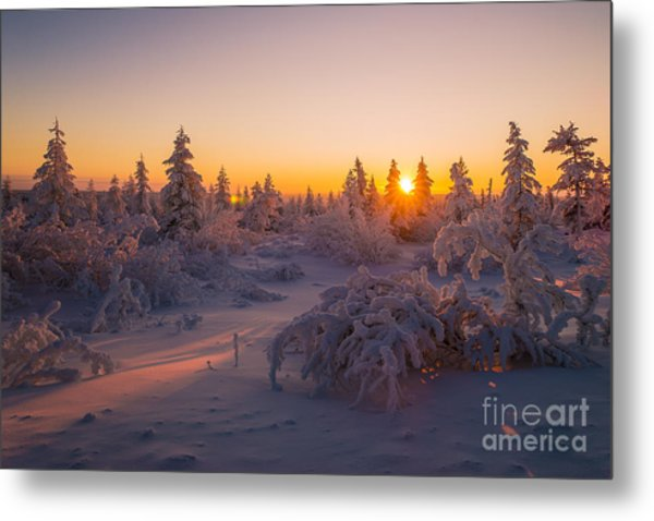 Winter Landscape With Forest Trees Metal Print
