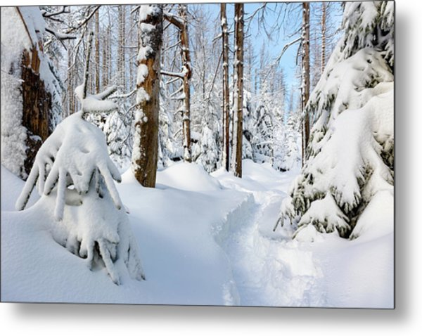 Metal Print featuring the photograph winter path, Harz by Andreas Levi