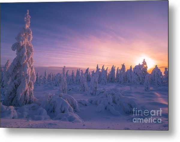 Winter Snowscape With Forest, Trees And Metal Print