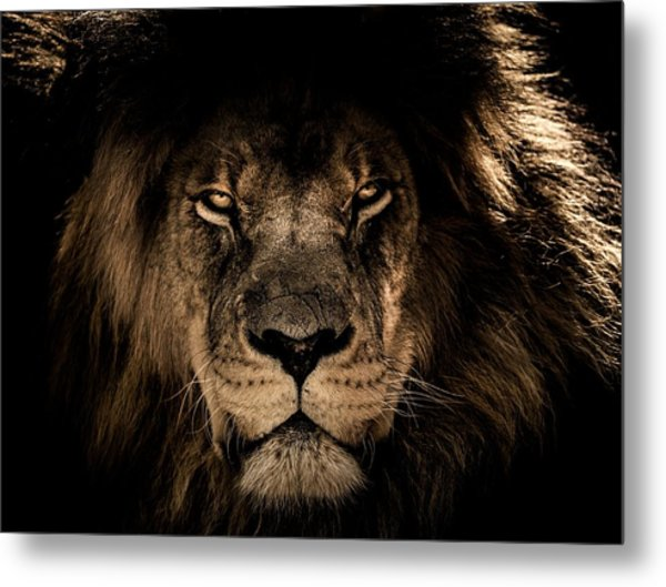 Wise Lion Metal Print