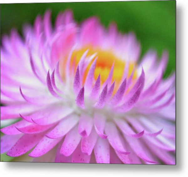 Wishes In Pink  Metal Print