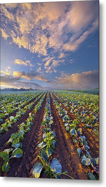 Metal Print featuring the photograph With A Faith Born Not Of Words But Of Deeds by Phil Koch