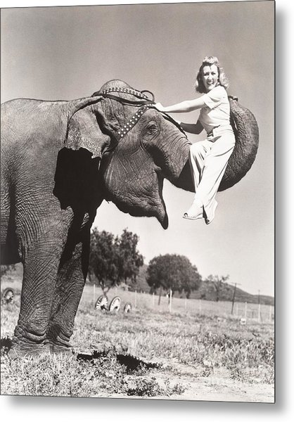 Woman Sitting On Elephants Trunk Metal Print