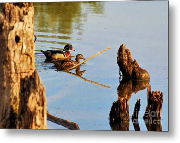 Metal Print featuring the photograph Wood Ducks by Debbie Stahre