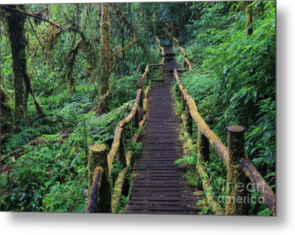 Wooden Bridge In Tropical Rain Forest Metal Print