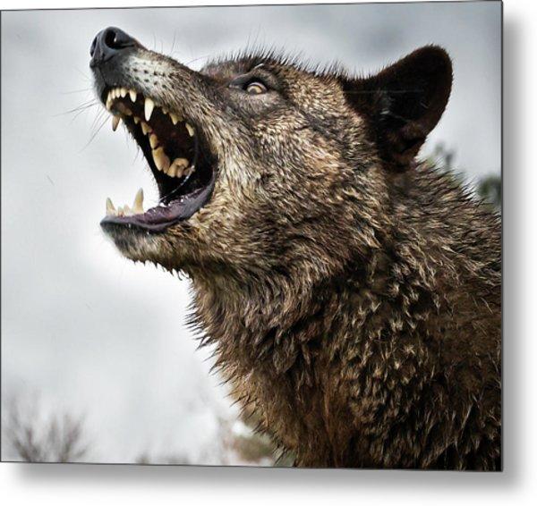 Woof Wolf Metal Print