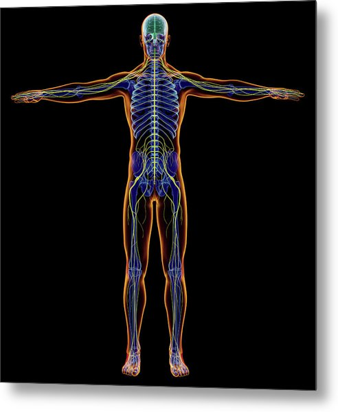 X-ray Effect Of Male Nervous System Metal Print