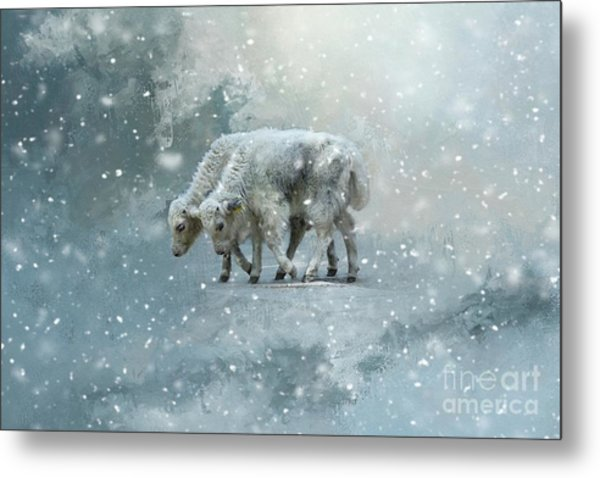 Yaks Calves In A Snowstorm Metal Print