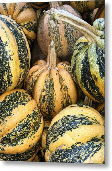 Yellow And Green Pumpkins Metal Print