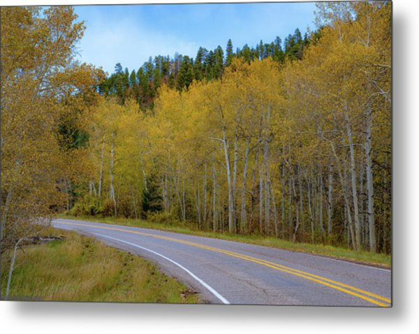 Yellow Aspens Metal Print