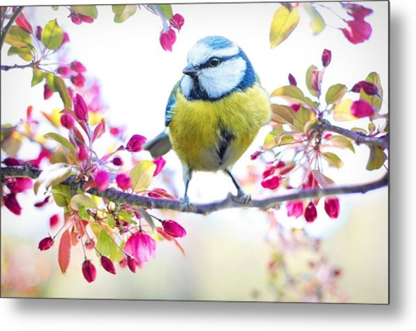 Yellow Blue Bird With Flowers Metal Print