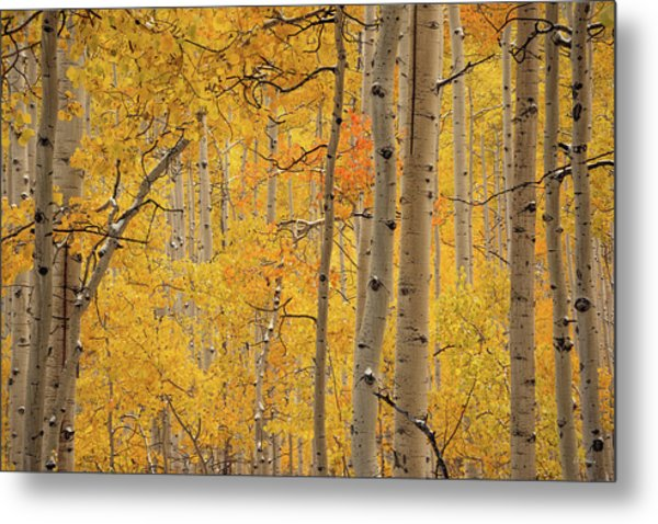 Yellow Forest Metal Print by Leland D Howard