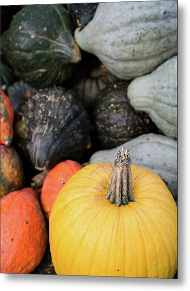 Metal Print featuring the photograph Yellow Pumpkin by Whitney Leigh Carlson